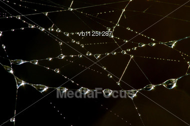 Drops Of Dew On The Web In The Early Morning Stock Photo