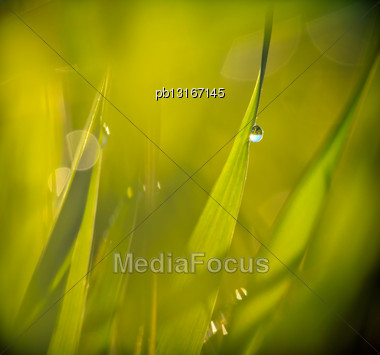 Drops On A Grass Stock Photo