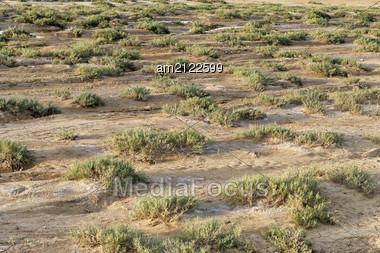 Dry Barren Terrain With Scrubby Vegetation In An Arid Semi-dessert Region, Deserted Environmental Background. Stock Photo