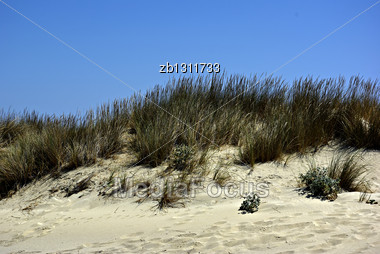Dry Grass At Sandy Dunes Against Clear Blue Sky At Sunny Summer Day Stock Photo