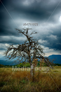 Dry Leafless Tree At Field With High Dry Grass Against Dark Stormy Sky Stock Photo