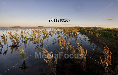 Dry Weeds And Marshland Saskatchewan Canada Sunset Stock Photo