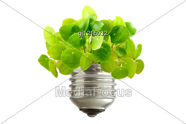 Ecological Concept Green Plant Growing Out Of A Bulb Stock Photo