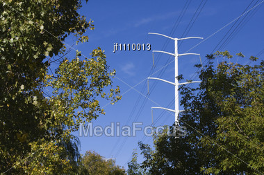 Electrical Power Lines Framed By The Surrounding Trees Stock Photo