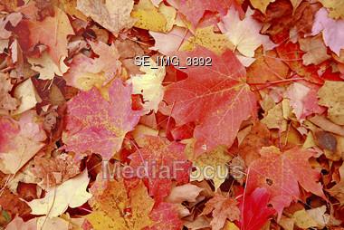 Fall Background Stock Photo