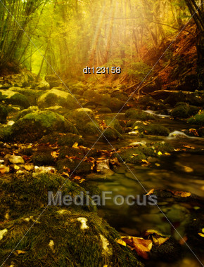 Fantastic Autumn In The Forest. Crimean Mountains, Eastern Europe Stock Photo