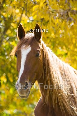 Farm Animal, Horse Stock Photo