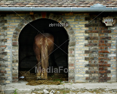 Farm Horse With Long Tail Standing In Stable Made Of Bricks Stock Photo