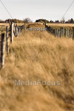 Farm Trail And Fence Prairie Grass Saskatchewan Canada Stock Photo