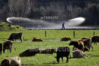 Farmer Checks His Effluent Sprayer On A Dairy Farm In Westland, New Zealand Stock Photo