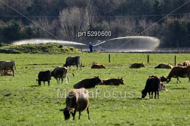 Farmer Checks His Effluent Sprayer On A Dairy Farm In Westland, New Zealand Stock Photo