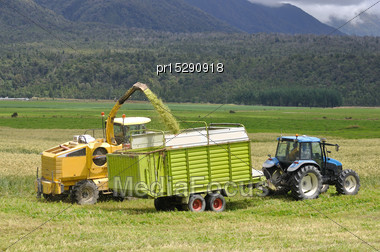 Farmers Harvest A Crop Of Triticale For Silage On A Dairy Farm In Westland, New Zealand Stock Photo