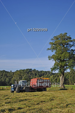 Farmers Harvest A Crop Of Triticale For Silage On A Dairy Farm Stock Photo