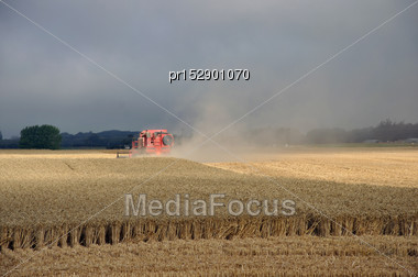 Farmers Harvest A Crop Of Wheat, South Canterbury, New Zealand Stock Photo