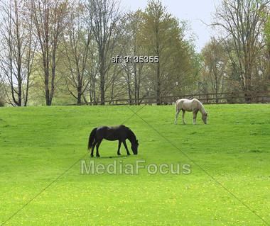 Farmland With Feeding Horses Stock Photo