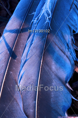 Feather Front Of Little Crow Plumage Blue And Abstract Light Stock Photo