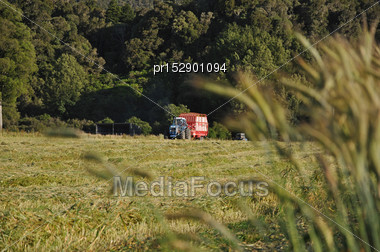 Feed Wagon Collecting A Mown Triticale Crop That Was Grown For Silage, West Coast, New Zealand Stock Photo