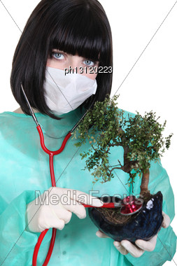 Female Surgeon Checking The Health Of A Bonsai Stock Photo