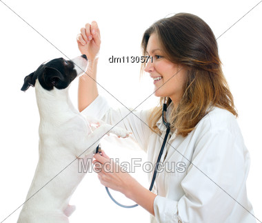 Female Veterinarian Examining Jack Russell Terrier With Stethoscope. Isolated On White Stock Photo