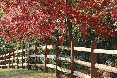 Fence in the Fall Stock Photo