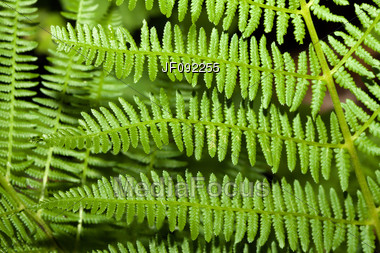 Fern Branches Background Stock Photo