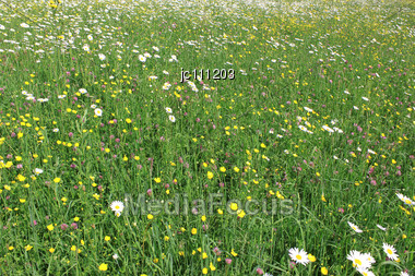 Field With Different Spring Flowers On A Carpet Of Green Stock Photo