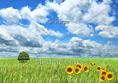 Field Of Grass , Sunflowers And Beautiful Sky Stock Photo