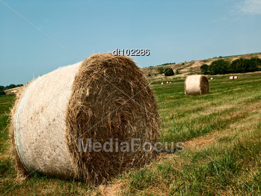 Field Of Straw Gathered Into Multiple Bales Of Hay Stock Photo