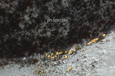 Fine Flakes Of Alluvial Gold In The Bottom Of A Gold Pan, West Coast, South Island, New Zealand Stock Photo