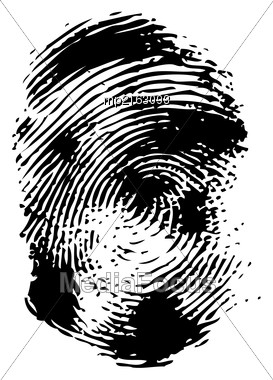 Fingerprint On A White Background. Vector Illustration Close-up Stock Photo