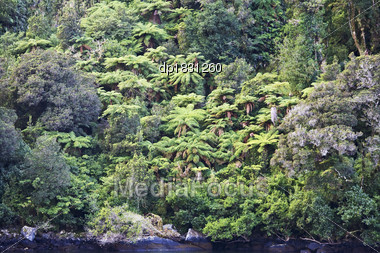 Fiordland National Park, Milford Sound, South Island, New Zealand Stock Photo