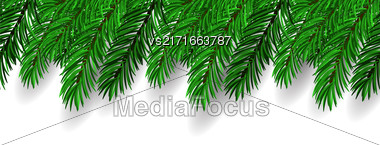 Fir Branch On White Background. Symbol Of New Year Stock Photo