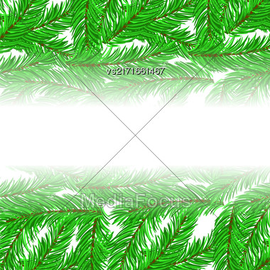 Fir Green Branches Pattern On White Background Stock Photo