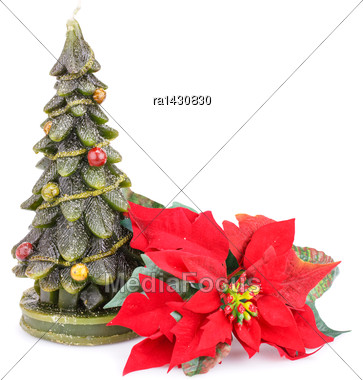 Fir Tree Candle And Holly Berry Flower Isolated On White Background Stock Photo