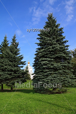 Fir Trees In Park Stock Photo