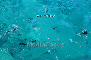 Fish Swimm In The Sea. Sea Blue Water Background Stock Photo
