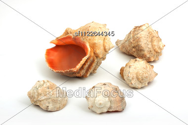Five Seashells Stock Photo