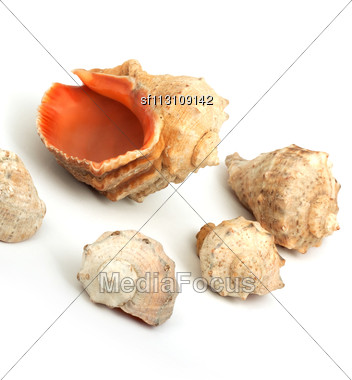 Five Seashells Isolated On A White Background Stock Photo