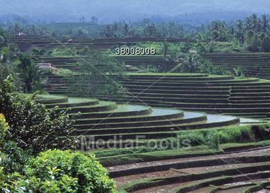 Flooded Rice Paddy, Thailand Stock Photo