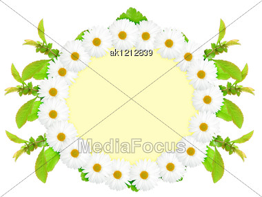 Floral Ellipse Frame With White Flowers And Green Leaf Nature Art Ornament Template For Your Design Close-up Studio Photography Stock Photo