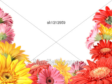 Floral Frame With Motley Flowers On White Background. Nature Art Ornament Template For Your Design. Close-up. Studio Photography. Stock Photo