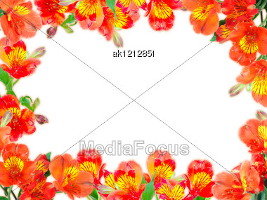 Floral Frame With Orange Flowers And Green Leaf On White Background. Nature Art Ornament Template For Your Design. Close-up. Studio Photography. Stock Photo