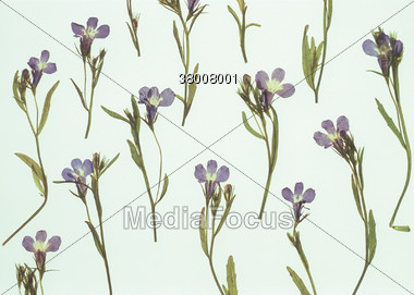 Floral Pattern with Forget-me-nots Stock Photo