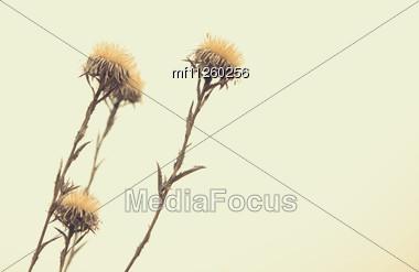Floral Retro Background Stock Photo