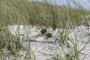 Florida dune Stock Photo