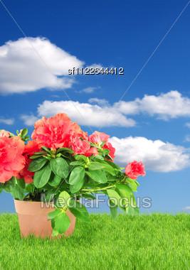Flower In A Flowerpot Stock Photo