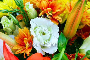 Flowers Bouquet Picture For Greeting Cards. Stock Photo