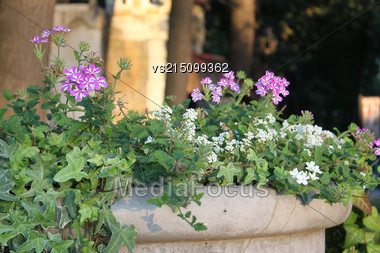 Flowers In A City Park. Flowers In Stone Vase At Sun Light Stock Photo