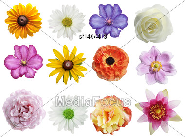 Flowers Collection Isolated On White Background Stock Photo