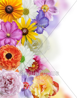 Flowers Collection On White Background Stock Photo